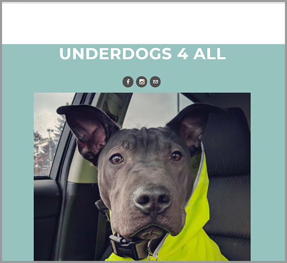 Underdogs 4 All website. Close up of black dog.