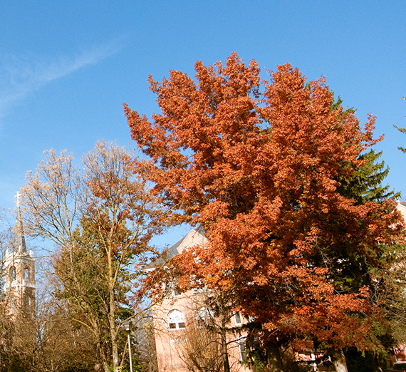 Campus trees and buildings during the late fall season