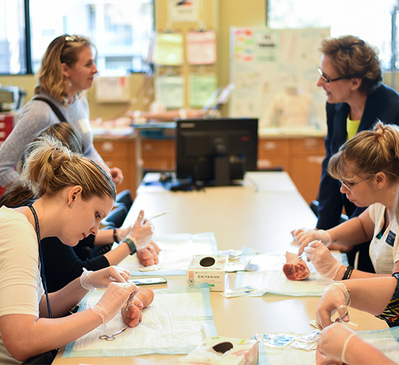 Gonzaga's School of Nursing and Human Physiology Nursing Department Open House demo of stitching with pig feet
