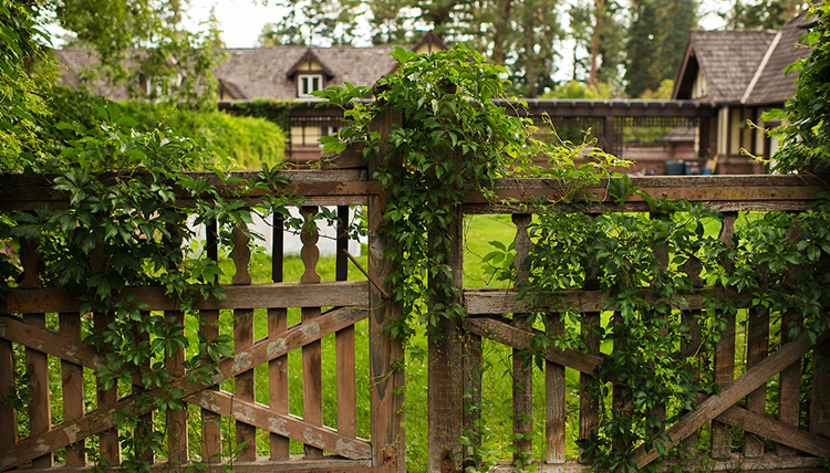 Wooden gate at Bozarth Mansion covered in vines