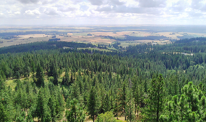 A view of the pine tree forest over the city of Spokane.