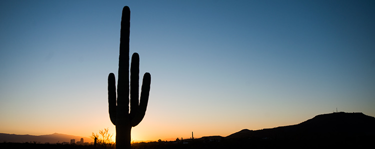 A saguaro cactus stands silhouetted in the wilderness