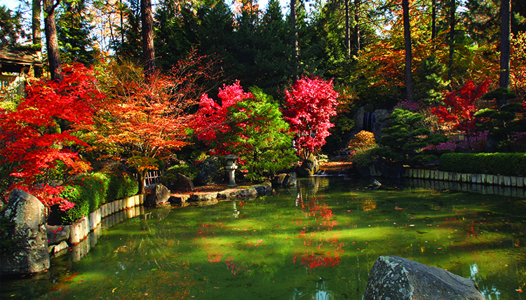 Beautiful fall trees surround a small pond in a Japanese garden.