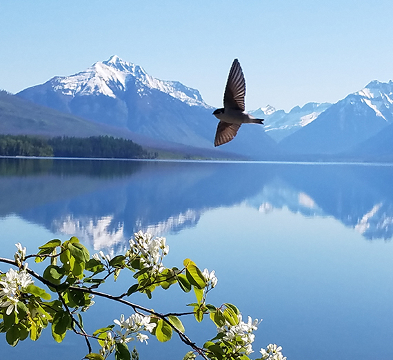 bird flying over lake with mountains reflected