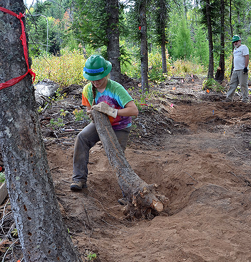 A Gonzaga student in an environmental studies course helps build a new trail with the Washington Trails Association on the recently acquired Mica Peak conservation land. (Photo courtesy Greg Gordon)