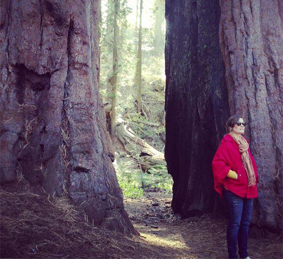 anne osgood among ancient trees