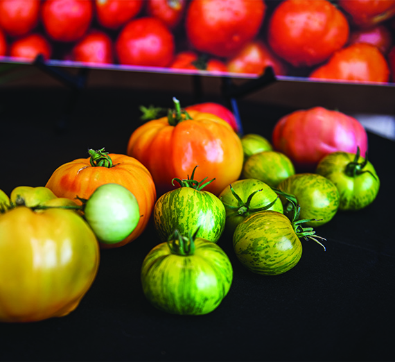 A pile of heirloom tomatoes sit on a black tablecloth.