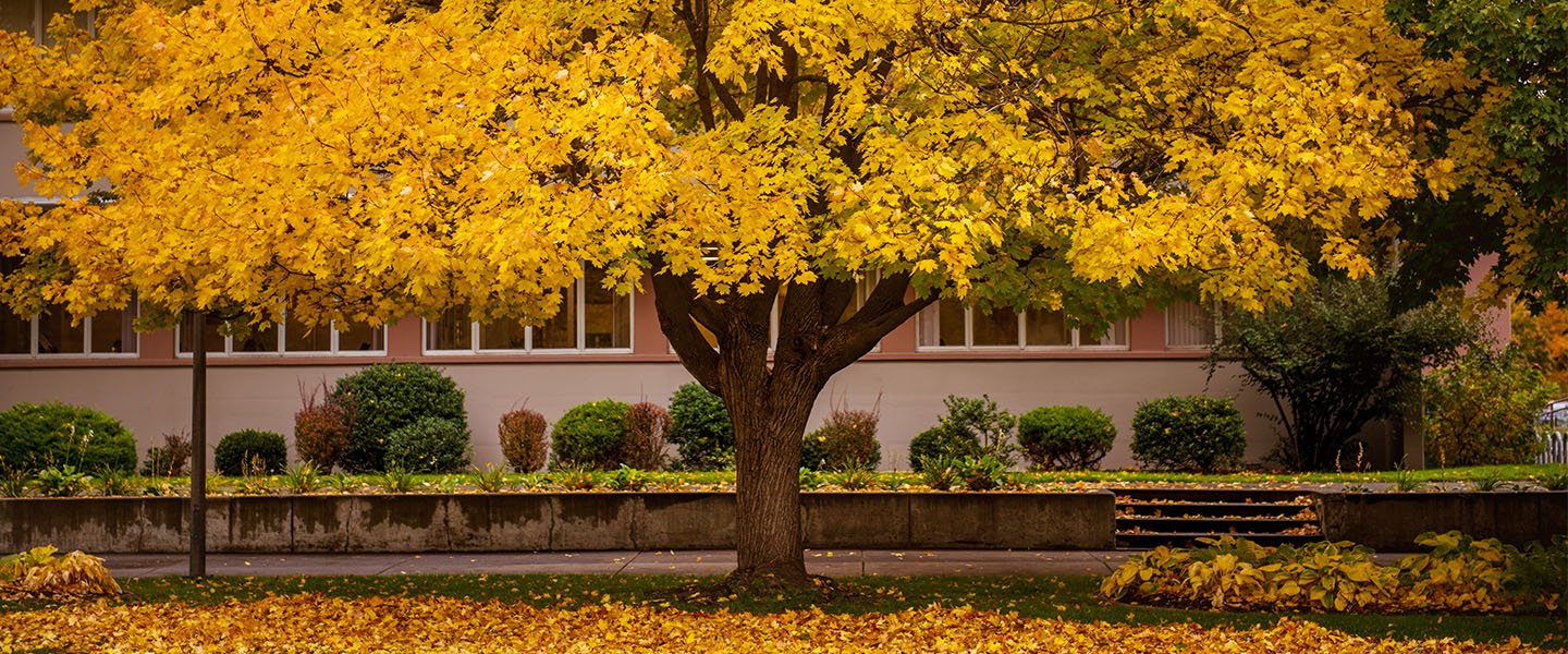 Tree with fall leaves by the Crosby center